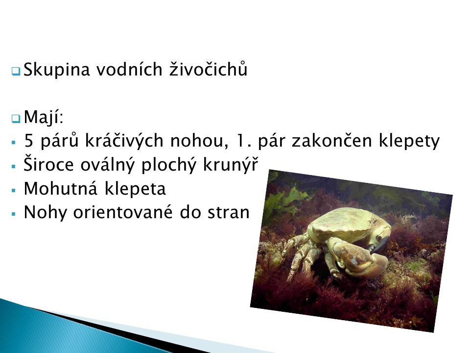  Skupina vodních živočichů  Mají:  5 párů kráčivých nohou, 1. pár zakončen klepety  Široce oválný plochý krunýř  Mohutná klepeta  Nohy orientova