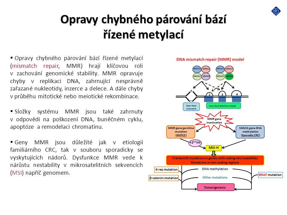 Opravy chybného párování bází řízené metylací  Opravy chybného párování bází řízené metylací (mismatch repair, MMR) hrají klíčovou roli v zachování g