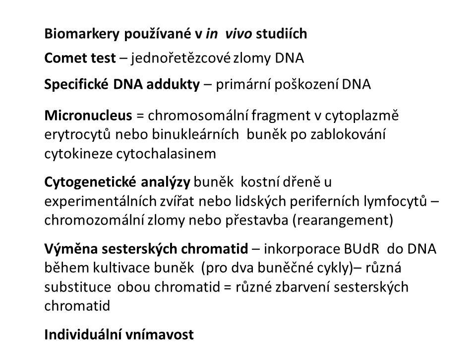 Biomarkery používané v in vivo studiích Comet test – jednořetězcové zlomy DNA Specifické DNA addukty – primární poškození DNA Micronucleus = chromosom