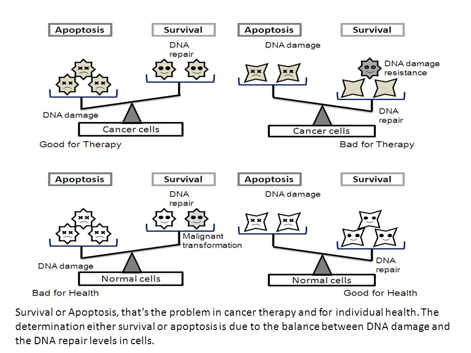 Survival or Apoptosis, that's the problem in cancer therapy and for individual health. The determination either survival or apoptosis is due to the ba