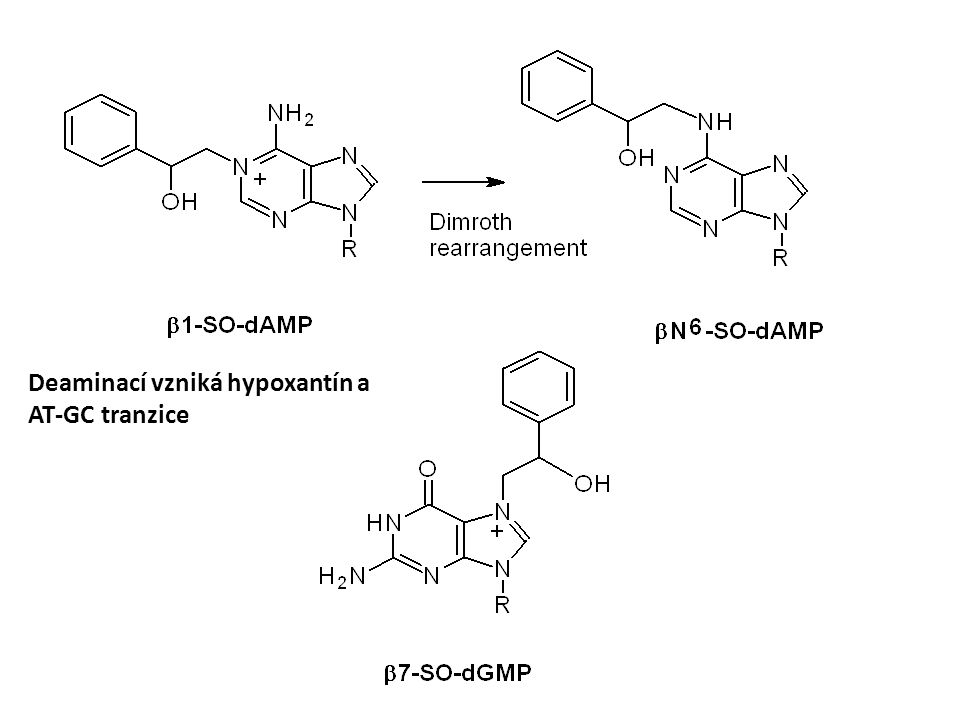 Deaminací vzniká hypoxantín a AT-GC tranzice
