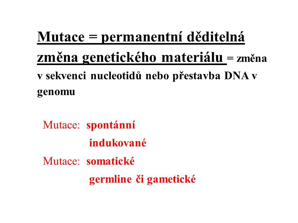 Mutace = permanentní děditelná změna genetického materiálu = změna v sekvenci nucleotidů nebo přestavba DNA v genomu Mutace: spontánní indukované Muta