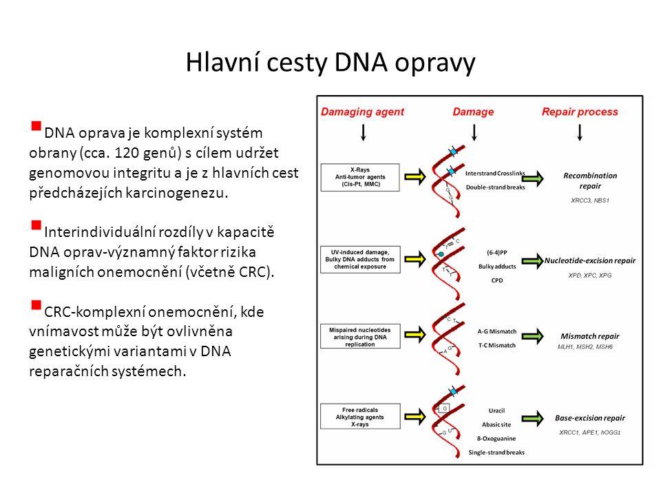 Hlavní cesty DNA opravy  DNA oprava je komplexní systém obrany (cca. 120 genů) s cílem udržet genomovou integritu a je z hlavních cest předcházejích