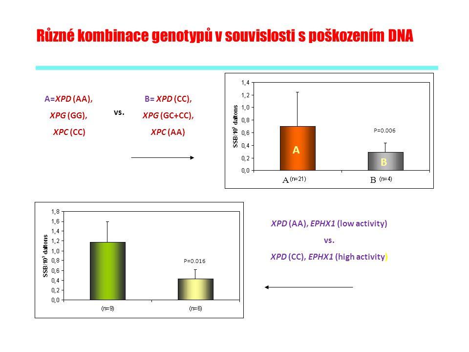 XPD (AA), EPHX1 (low activity) vs. XPD (CC), EPHX1 (high activity) Různé kombinace genotypů v souvislosti s poškozením DNA AB B= XPD (CC), XPG (GC+CC)