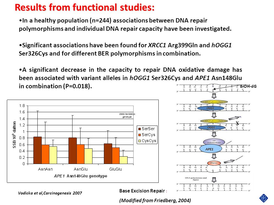 Results from functional studies: Vodicka et al,Carcinogenesis 2007 In a healthy population (n=244) associations between DNA repair polymorphisms and i