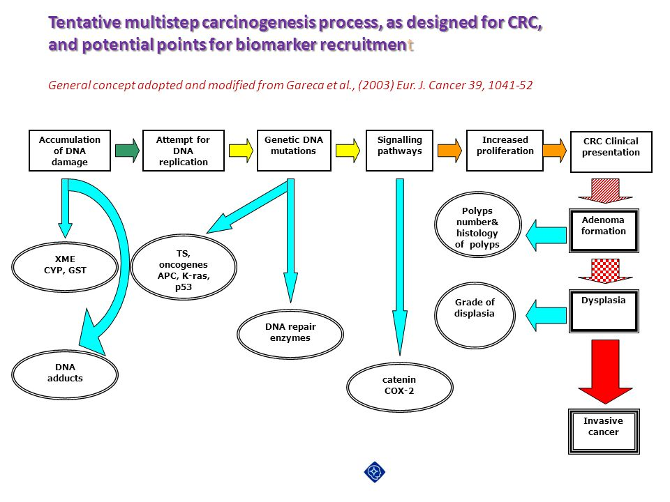 Tentative multistep carcinogenesis process, as designed for CRC, and potential points for biomarker recruitment General concept adopted and modified f
