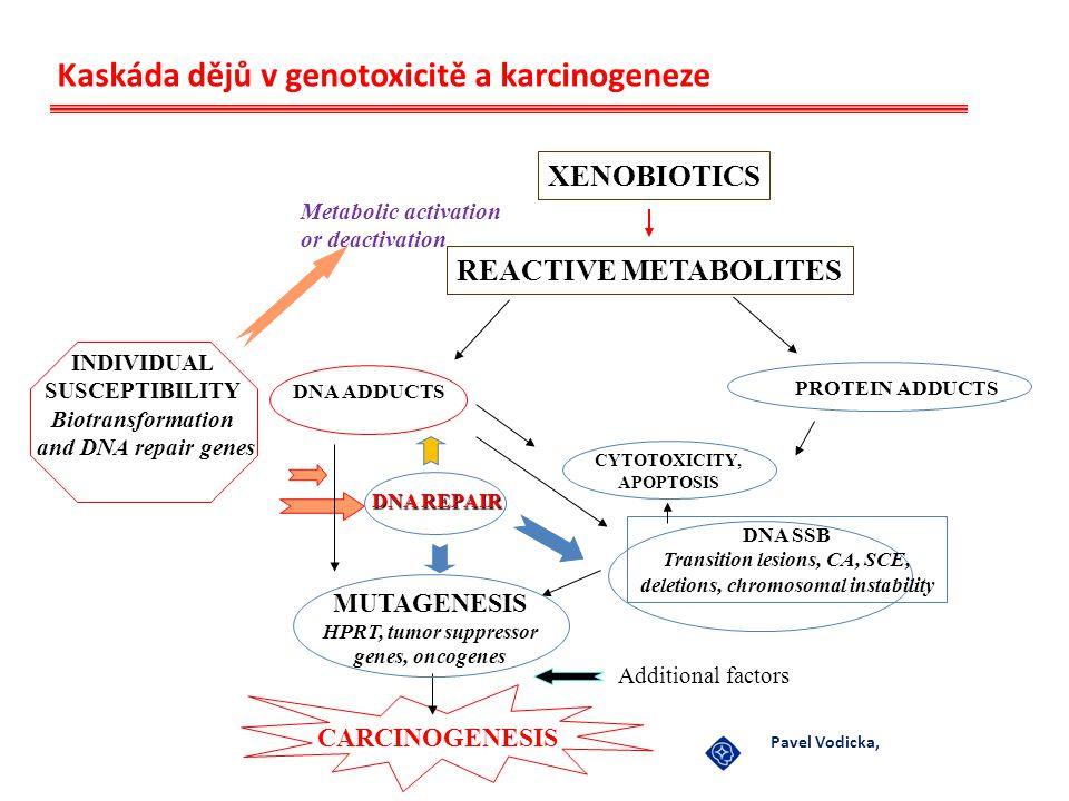 Mutageny Fyzikální: radiace UV (ultrafialové záření) → T-T, C-C, T-C dimery = chyby v replikaci a transkripci ionizing (rtg, γ) přímý účinek → DNA zlomy nepřímý účinek → ionizace molekul → DNA zlomy Chemické– alkylační činidla - addukty - analoga bazí – chyby v párování bazí - acridinové barviva – inserce - kyselina dusičná –deaminace bazí – chyby v párování bazí přímé mutageny nepřímé mutageny– po metabolické aktivaci (cytochrom dependent oxygenázy) vznikají reaktivní produkty Biologické–viry - virové nukleové kyseliny se integrují do genomu hostitelské buňky