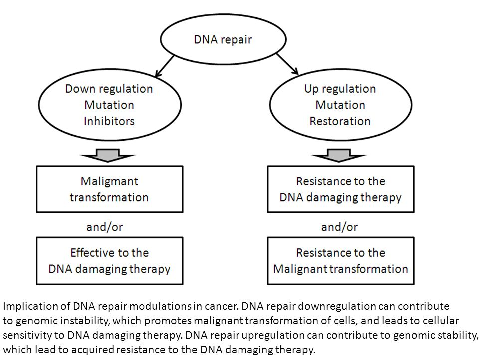 Implication of DNA repair modulations in cancer. DNA repair downregulation can contribute to genomic instability, which promotes malignant transformat