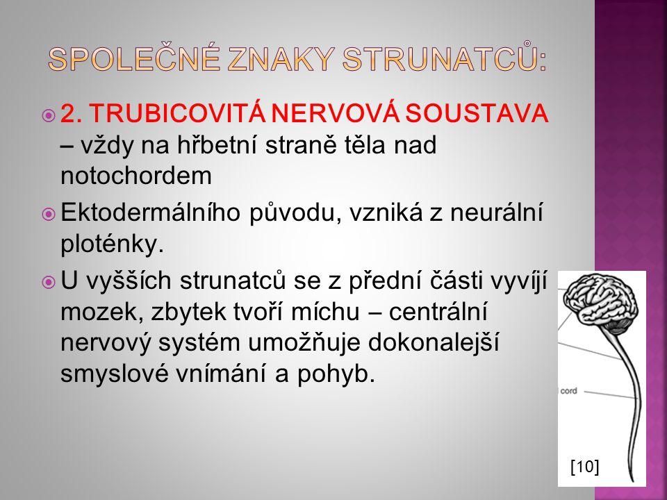 [8] Vznik amnionu (zárodečného obalu) u kotěte: ektoderm modře, mezoderm, červeně, entoderm a struna hřbetní černě Znázornění vzniku chordy a neurální trubice