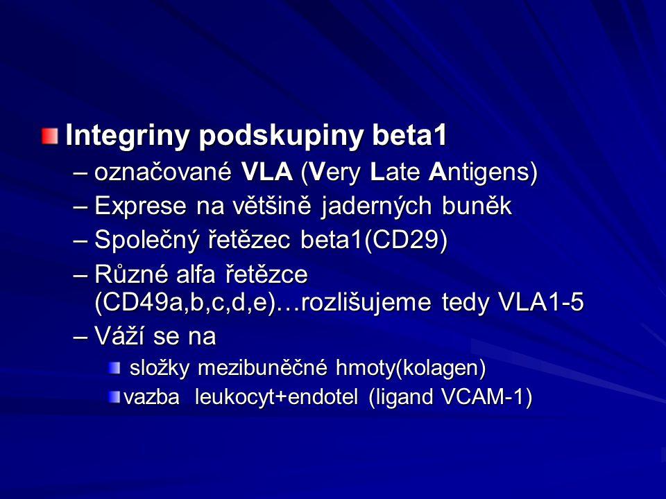 Integriny podskupiny beta1 –označované VLA (Very Late Antigens) –Exprese na většině jaderných buněk –Společný řetězec beta1(CD29) –Různé alfa řetězce