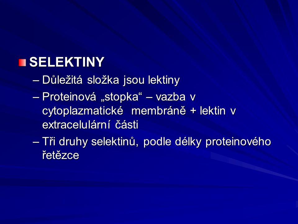 """SELEKTINY –Důležitá složka jsou lektiny –Proteinová """"stopka"""" – vazba v cytoplazmatické membráně + lektin v extracelulární části –Tři druhy selektinů,"""