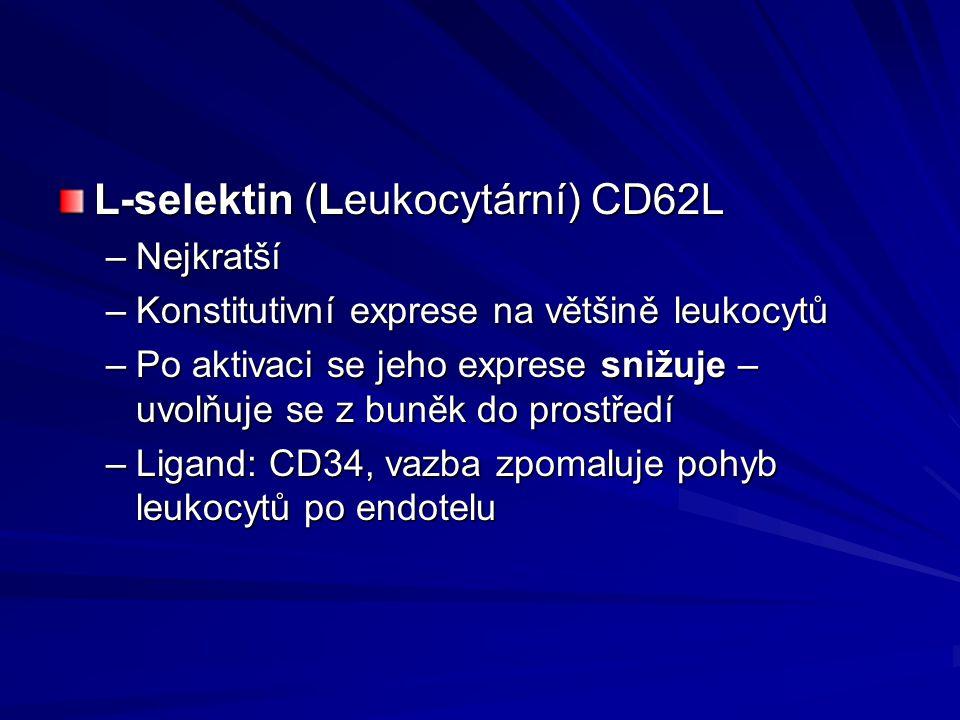 L-selektin (Leukocytární) CD62L –Nejkratší –Konstitutivní exprese na většině leukocytů –Po aktivaci se jeho exprese snižuje – uvolňuje se z buněk do p
