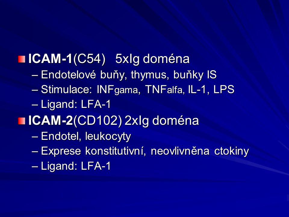 ICAM-1(C54) 5xIg doména –Endotelové buňy, thymus, buňky IS –Stimulace: INF gama, TNF alfa, IL-1, LPS –Ligand: LFA-1 ICAM-2(CD102) 2xIg doména –Endotel