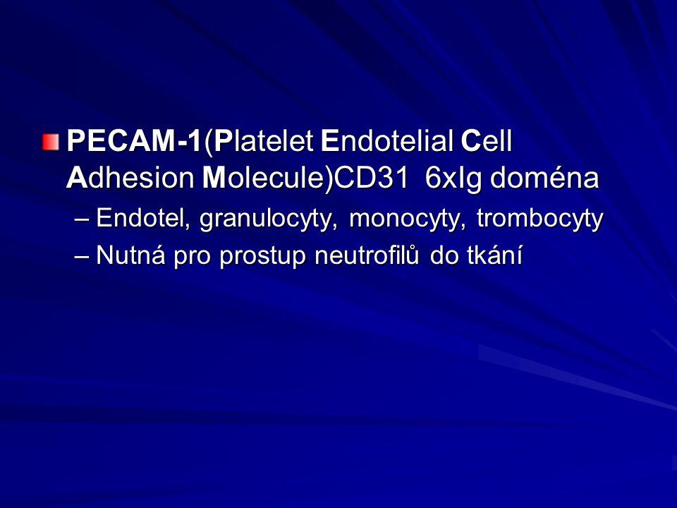 PECAM-1(Platelet Endotelial Cell Adhesion Molecule)CD31 6xIg doména –Endotel, granulocyty, monocyty, trombocyty –Nutná pro prostup neutrofilů do tkání