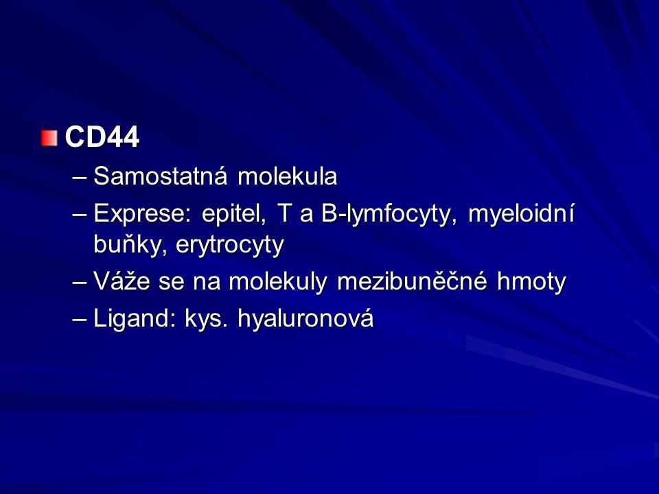 CD44 –Samostatná molekula –Exprese: epitel, T a B-lymfocyty, myeloidní buňky, erytrocyty –Váže se na molekuly mezibuněčné hmoty –Ligand: kys. hyaluron