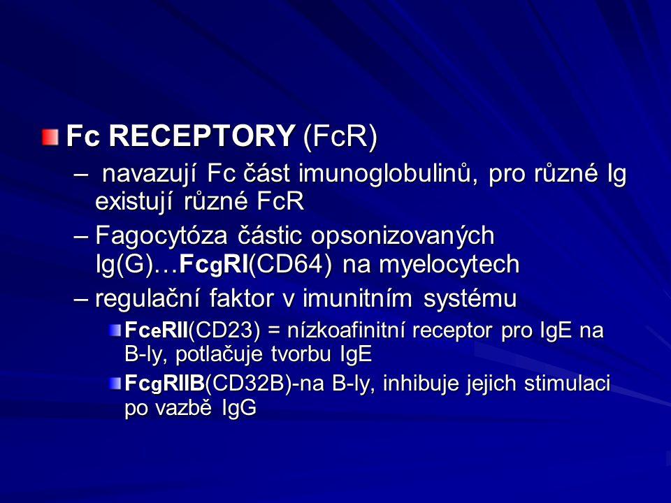 Fc RECEPTORY (FcR) – navazují Fc část imunoglobulinů, pro různé Ig existují různé FcR –Fagocytóza částic opsonizovaných Ig(G)…Fc g RI(CD64) na myelocy