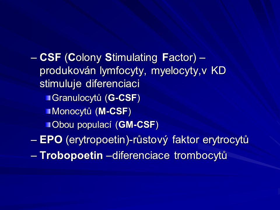 –CSF (Colony Stimulating Factor) – produkován lymfocyty, myelocyty,v KD stimuluje diferenciaci Granulocytů (G-CSF) Monocytů (M-CSF) Obou populací (GM-