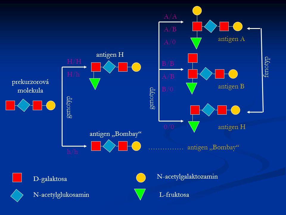 "antigen H antigen ""Bombay"" …………… antigen ""Bombay"" prekurzorová molekula genotyp fenotyp D-galaktosa N-acetylglukosamin N-acetylgalaktozamin L-fruktosa"