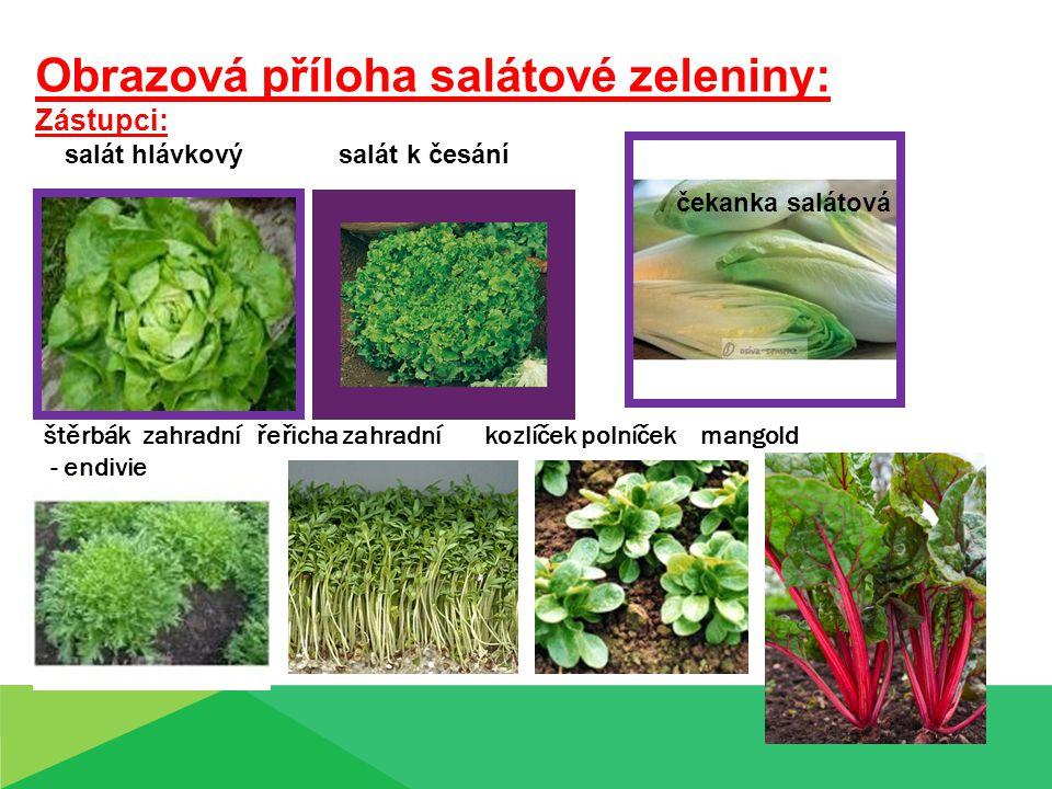 Obrazová příloha salátové zeleniny: Zástupci: salát hlávkový salát k česání štěrbák zahradní řeřicha zahradní kozlíček polníček mangold - endivie čeka