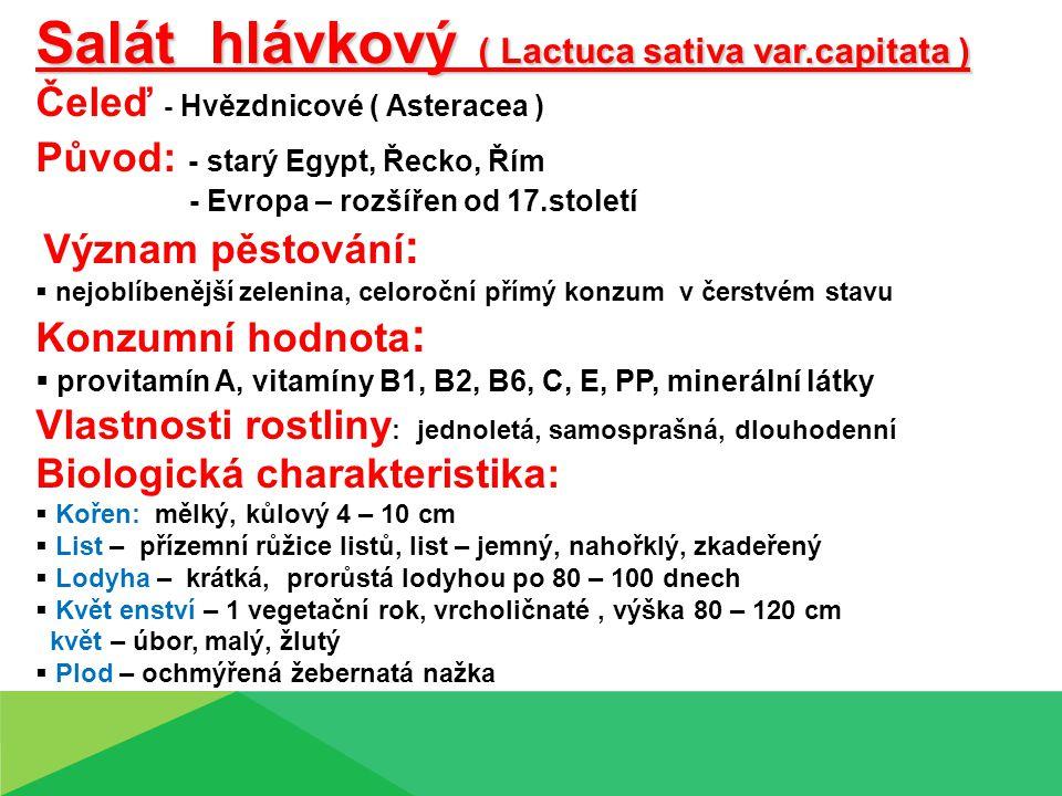 Salát hlávkový ( Lactuca sativa var.capitata ) Čeleď - Hvězdnicové ( Asteracea ) Původ: - starý Egypt, Řecko, Řím - Evropa – rozšířen od 17.století Vý