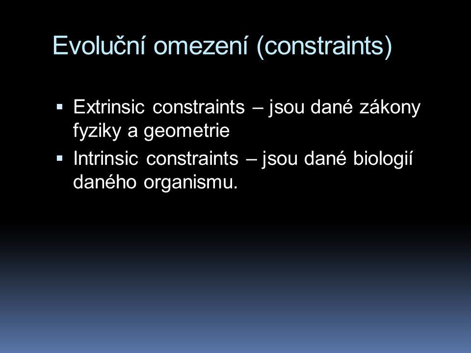 Evoluční omezení (constraints)  Extrinsic constraints – jsou dané zákony fyziky a geometrie  Intrinsic constraints – jsou dané biologií daného organ
