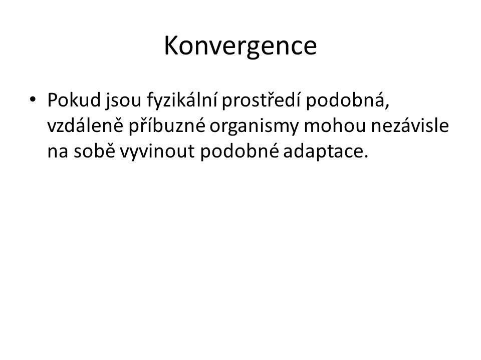 Konvergence Pokud jsou fyzikální prostředí podobná, vzdáleně příbuzné organismy mohou nezávisle na sobě vyvinout podobné adaptace.