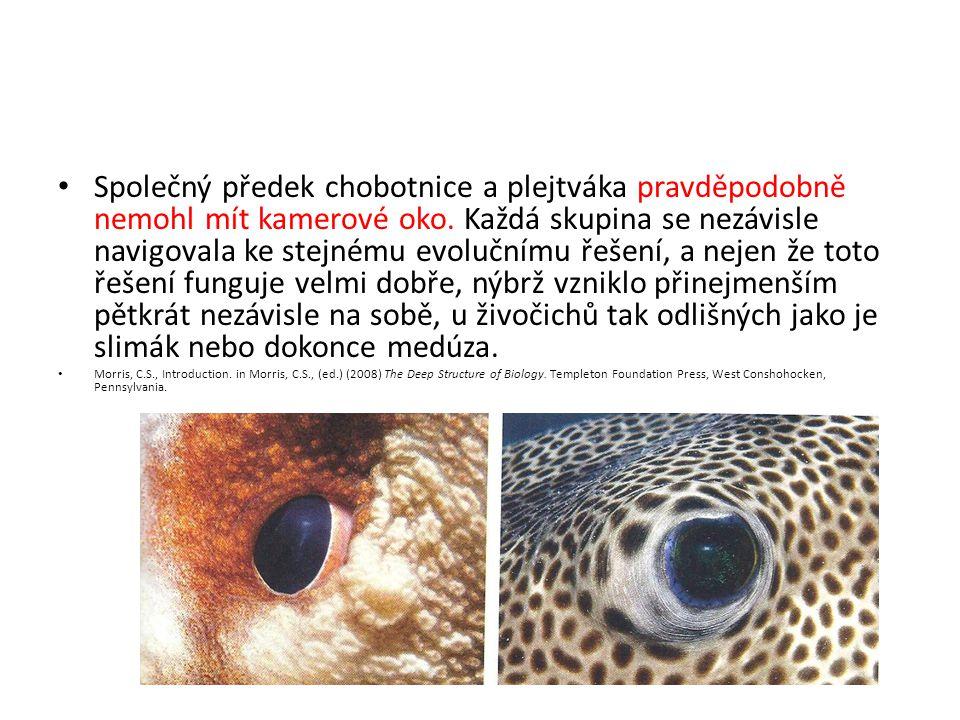Společný předek chobotnice a plejtváka pravděpodobně nemohl mít kamerové oko. Každá skupina se nezávisle navigovala ke stejnému evolučnímu řešení, a n
