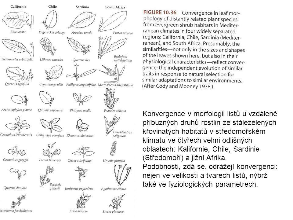 Konvergence v morfologii listů u vzdáleně příbuzných druhů rostlin ze stálezelených křovinatých habitatů v středomořském klimatu ve čtyřech velmi odli