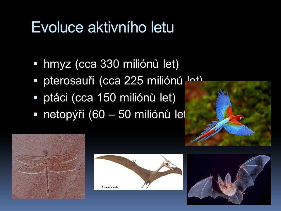 Evoluce aktivního letu  hmyz (cca 330 miliónů let)  pterosauři (cca 225 miliónů let)  ptáci (cca 150 miliónů let)  netopýři (60 – 50 miliónů let)
