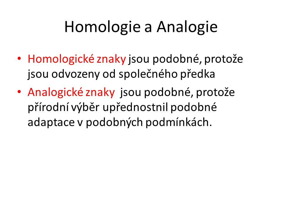 Homologie a Analogie Homologické znaky jsou podobné, protože jsou odvozeny od společného předka Analogické znaky jsou podobné, protože přírodní výběr