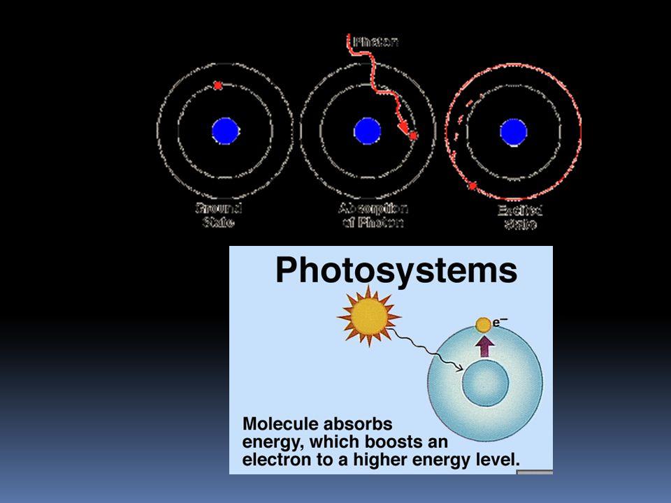 George Wald zdůraznil, že pokud srovnáme absorpční spektra různých typů chlorofylů se spektrem světla přicházejícího ze Slunce, shoda je mírně řečeno žalostná.