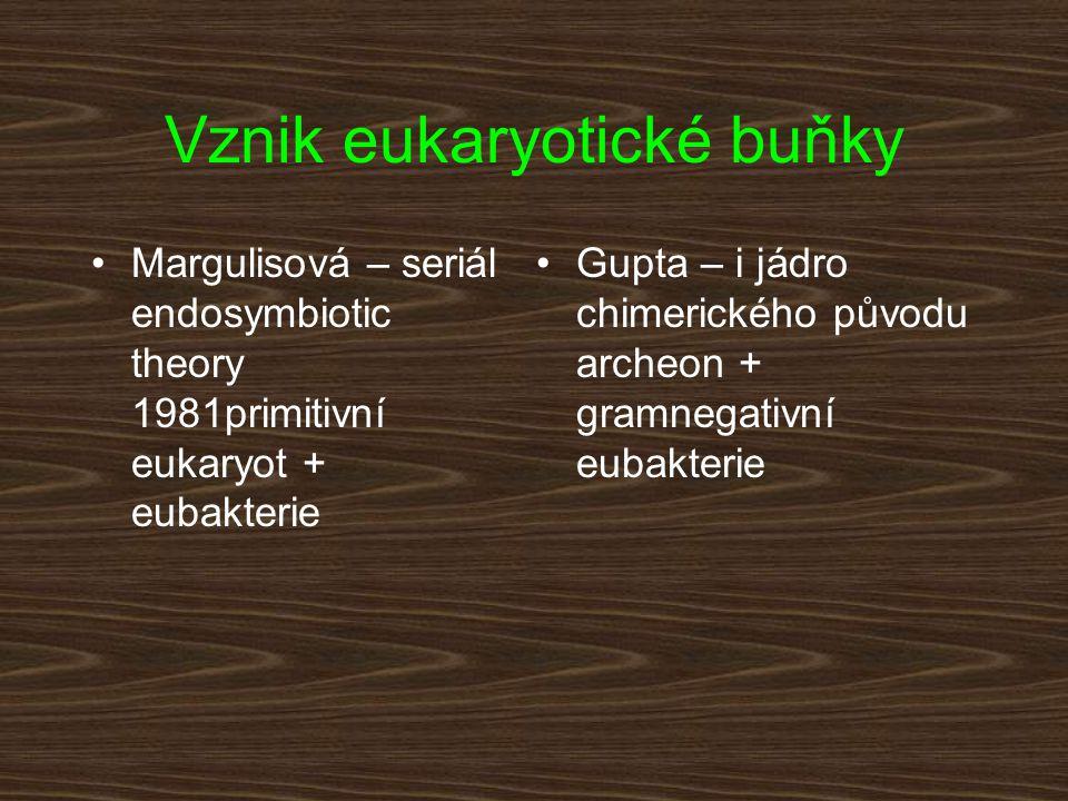 Vznik eukaryotické buňky Margulisová – seriál endosymbiotic theory 1981primitivní eukaryot + eubakterie Gupta – i jádro chimerického původu archeon +