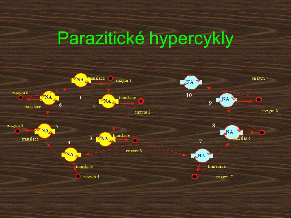 Parazitické hypercykly translace enzym 1 enzym 2 enzym 3 enzym 6 enzym 4 enzym 5 1 2 3 4 5 6
