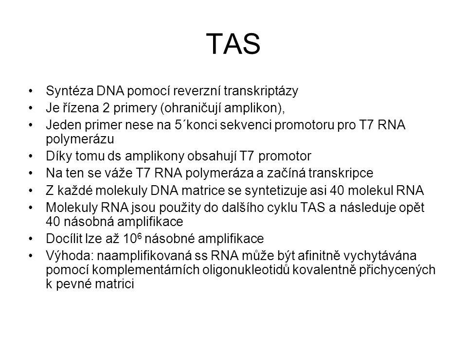 TAS Syntéza DNA pomocí reverzní transkriptázy Je řízena 2 primery (ohraničují amplikon), Jeden primer nese na 5´konci sekvenci promotoru pro T7 RNA po