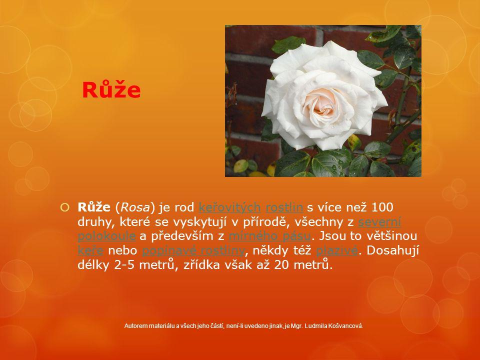Růže  Růže (Rosa) je rod keřovitých rostlin s více než 100 druhy, které se vyskytují v přírodě, všechny z severní polokoule a především z mírného pásu.