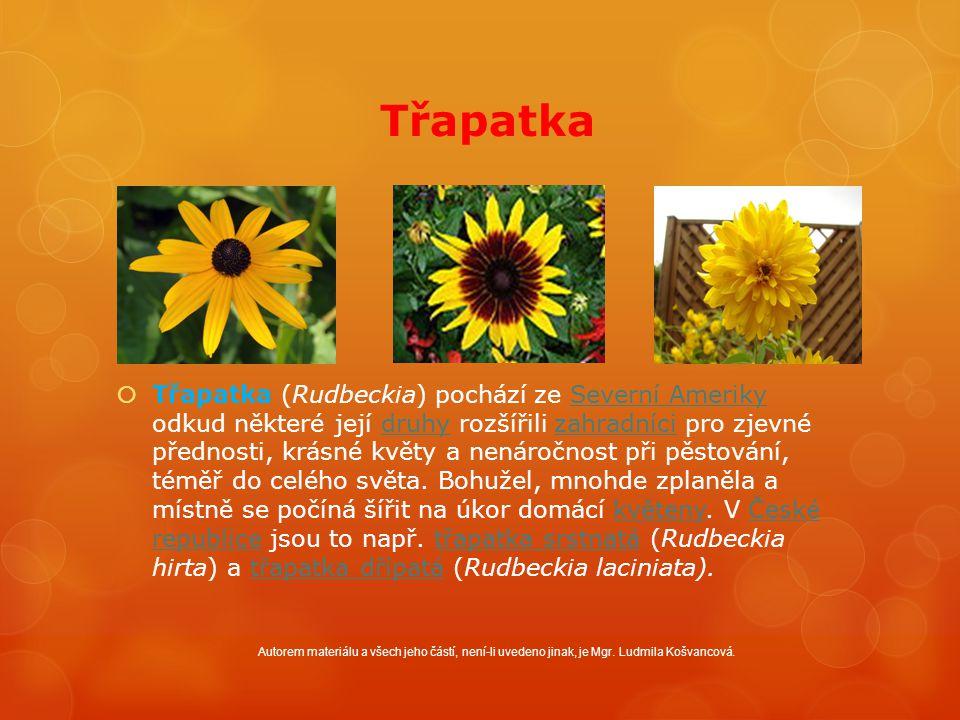 Třapatka  Třapatka (Rudbeckia) pochází ze Severní Ameriky odkud některé její druhy rozšířili zahradníci pro zjevné přednosti, krásné květy a nenáročnost při pěstování, téměř do celého světa.