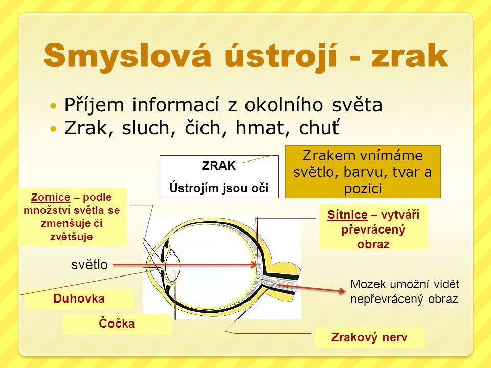 Smyslová ústrojí - zrak Příjem informací z okolního světa Zrak, sluch, čich, hmat, chuť ZRAK Ústrojím jsou oči Zrakový nerv Sítnice – vytváří převráce