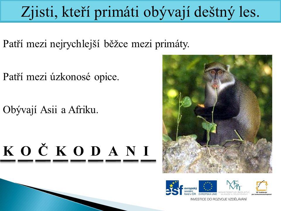 Zjisti, kteří primáti obývají deštný les. Obývají Asii a Afriku. Patří mezi úzkonosé opice. Patří mezi nejrychlejší běžce mezi primáty. KKOČONADI