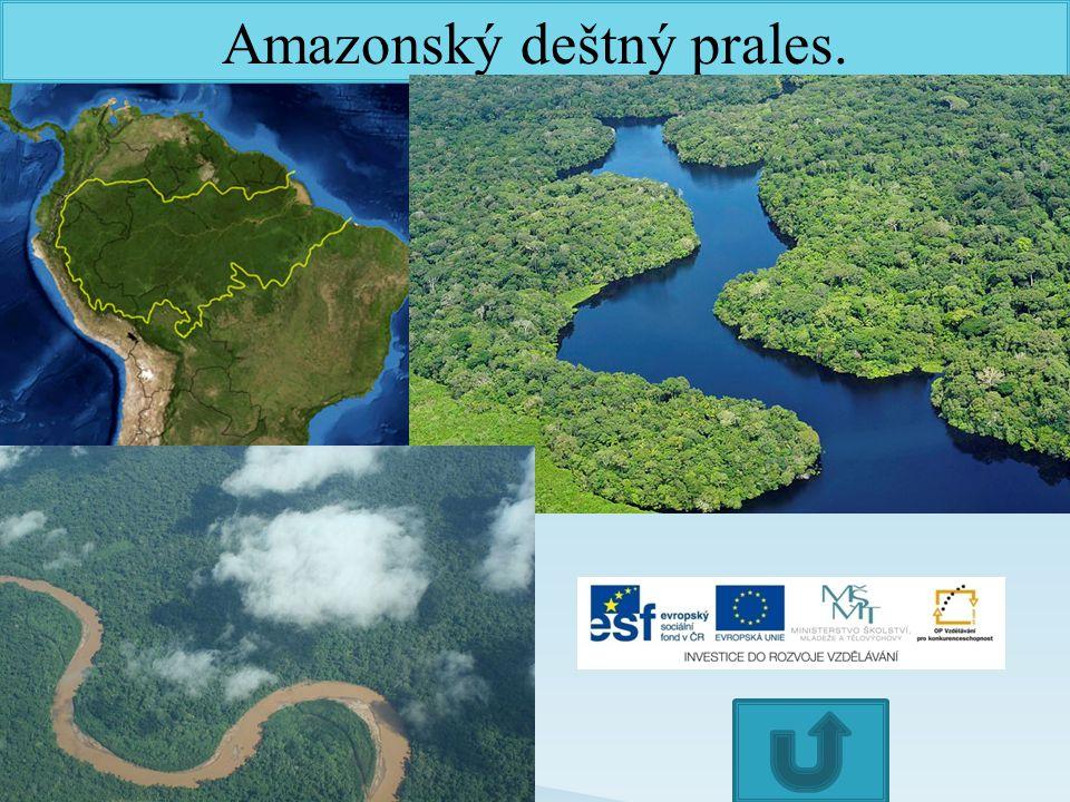 Amazonský deštný prales.