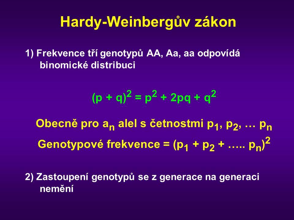 Hardy-Weinbergův zákon 1) Frekvence tří genotypů AA, Aa, aa odpovídá binomické distribuci Obecně pro a n alel s četnostmi p 1, p 2, … p n Genotypové f
