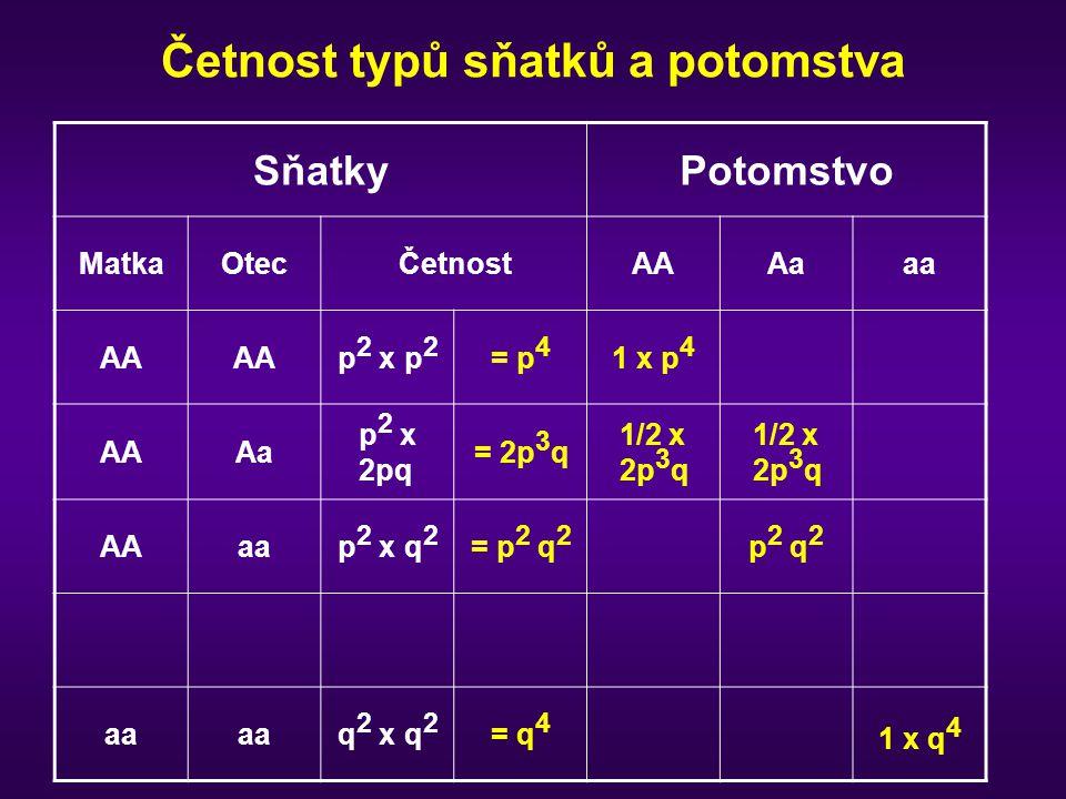 Četnost typů sňatků a potomstva SňatkyPotomstvo MatkaOtecČetnostAAAaaa AA p 2 x p 2 = p 4 1 x p 4 AAAa p 2 x 2pq = 2p 3 q 1/2 x 2p 3 q AAaap 2 x q 2 =