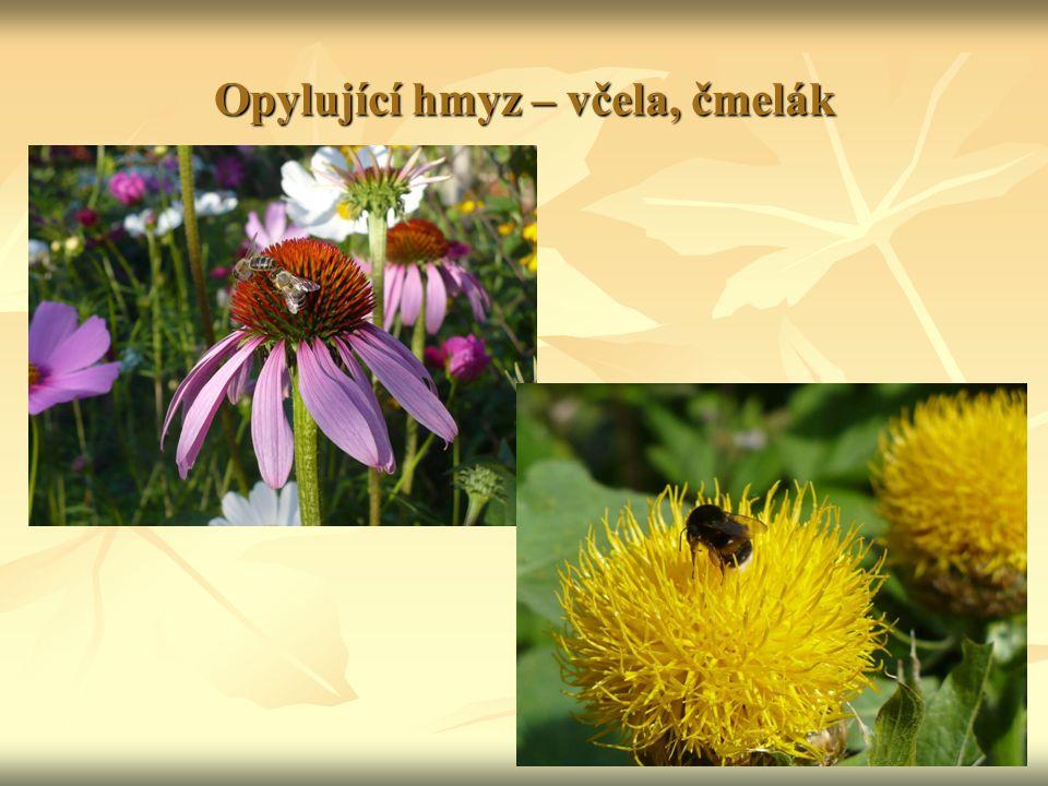 Opylující hmyz – včela, čmelák