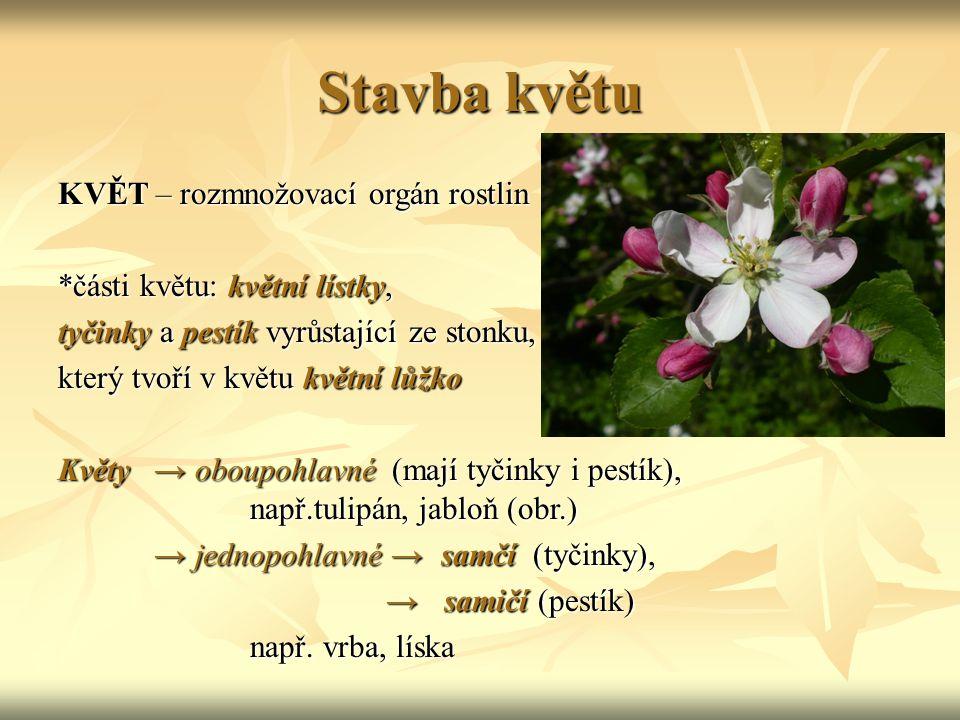 Stavba květu KVĚT – rozmnožovací orgán rostlin *části květu: květní lístky, tyčinky a pestík vyrůstající ze stonku, který tvoří v květu květní lůžko K
