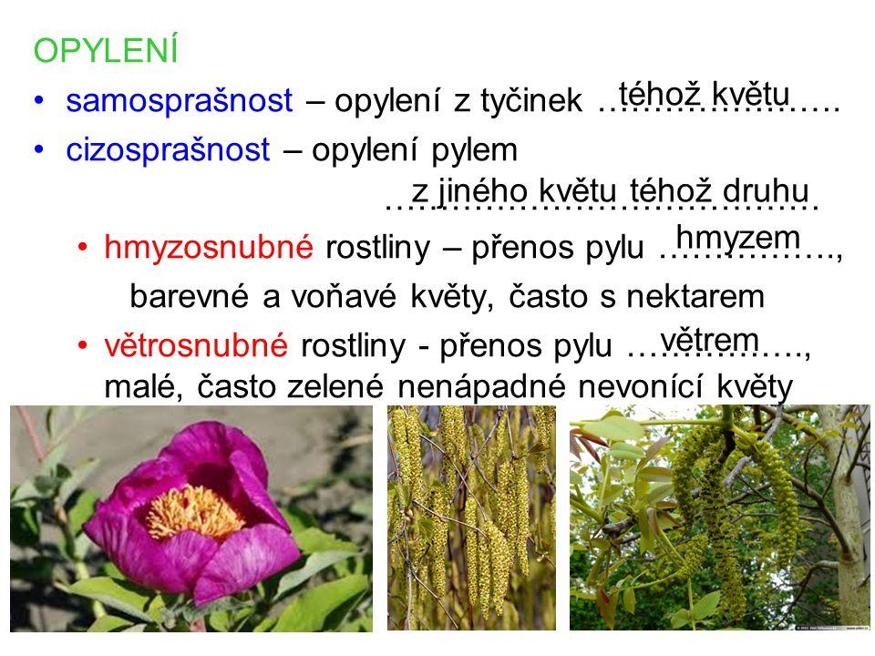 OPYLENÍ samosprašnost – opylení z tyčinek …………………. cizosprašnost – opylení pylem ………………………………… hmyzosnubné rostliny – přenos pylu ……………., barevné a vo