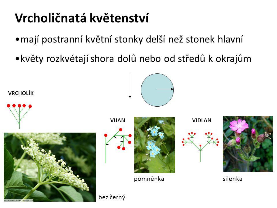 Vrcholičnatá květenství mají postranní květní stonky delší než stonek hlavní květy rozkvétají shora dolů nebo od středů k okrajům VIJAN pomněnka VIDLA