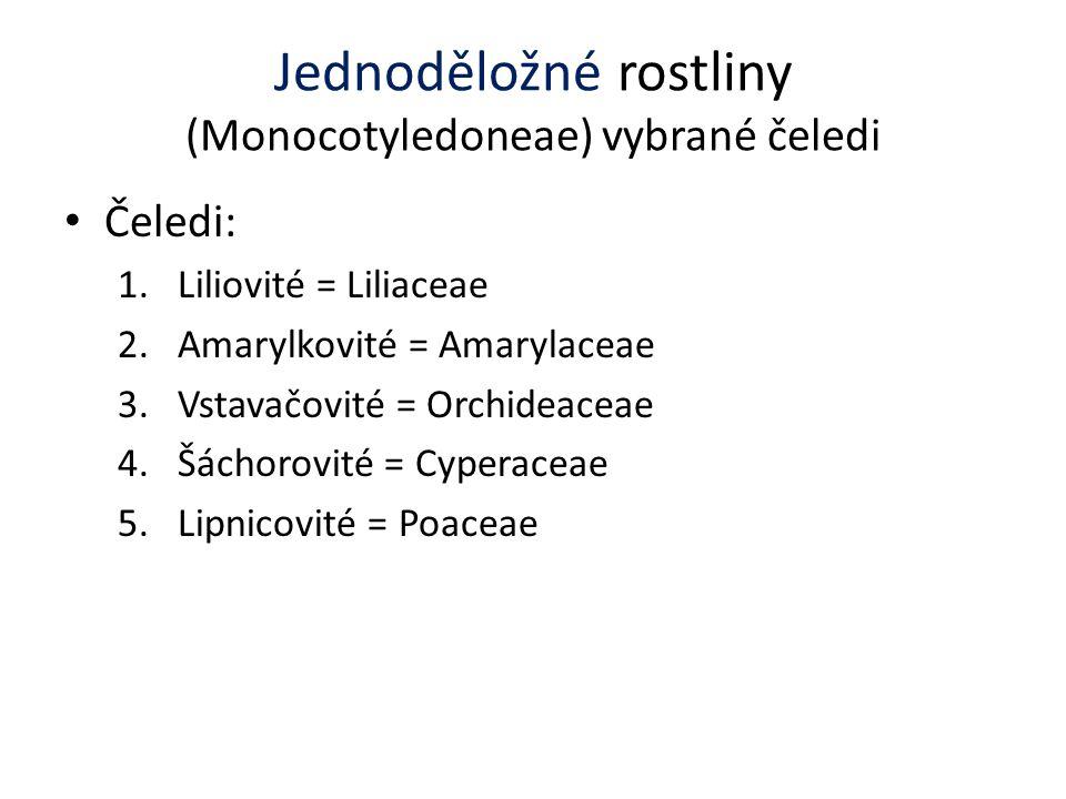Jednoděložné rostliny (Monocotyledoneae) vybrané čeledi Čeledi: 1.Liliovité = Liliaceae 2.Amarylkovité = Amarylaceae 3.Vstavačovité = Orchideaceae 4.Š