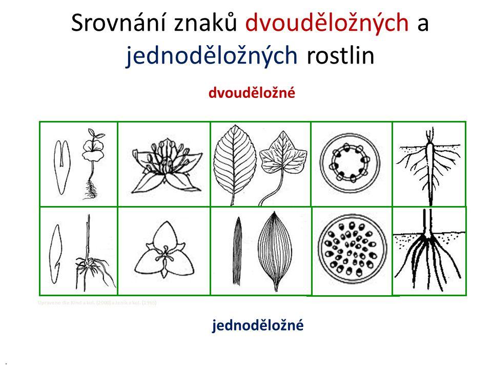 Srovnání znaků dvouděložných a jednoděložných rostlin dvouděložné jednoděložné Upraveno dle Kincl a kol. (2000) a Jeník a kol. (1965).