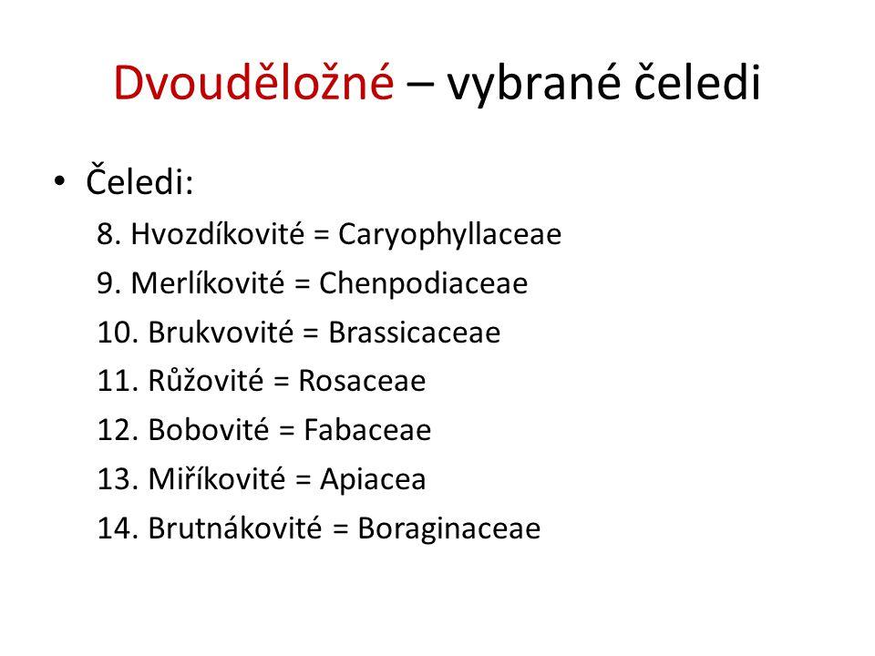 Dvouděložné – vybrané čeledi Čeledi: 8. Hvozdíkovité = Caryophyllaceae 9. Merlíkovité = Chenpodiaceae 10. Brukvovité = Brassicaceae 11. Růžovité = Ros