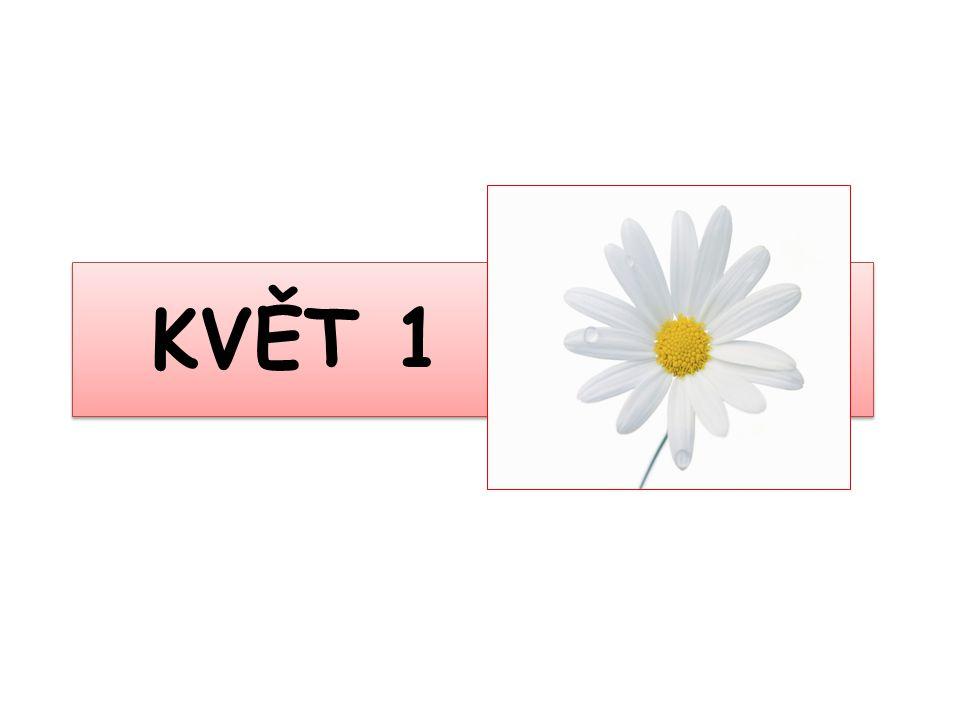 Květ KVĚTNÍ OBALY KVĚTNÍ LŮŽKO rozšířený vrchol stonku vznikly přeměnou listů, mohou i chybět