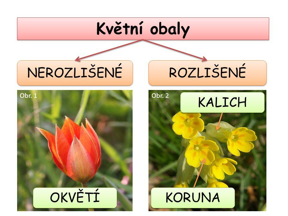 Květní obaly ROZLIŠENÉ NEROZLIŠENÉ OKVĚTÍ KALICH KORUNA Obr. 1Obr. 2